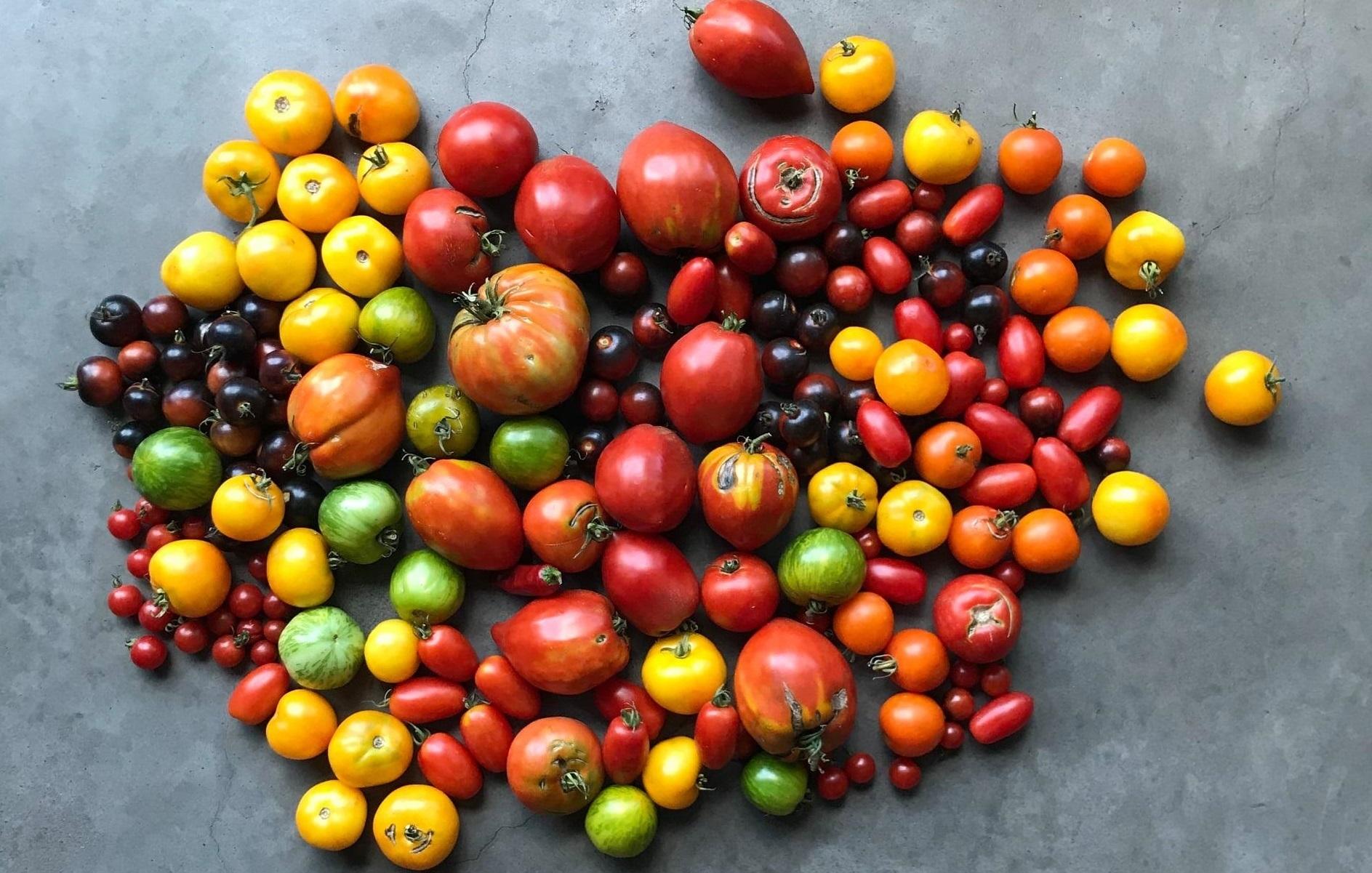 Tomates de la Ferme ALMANA à Saint Alban